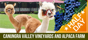 Canungra Valley Vineyards and Alpaca Farm